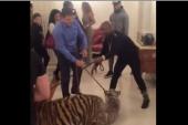 El tenso momento que protagonizó Floyd Mayweather junto a dos tigres en un hotel de Moscú